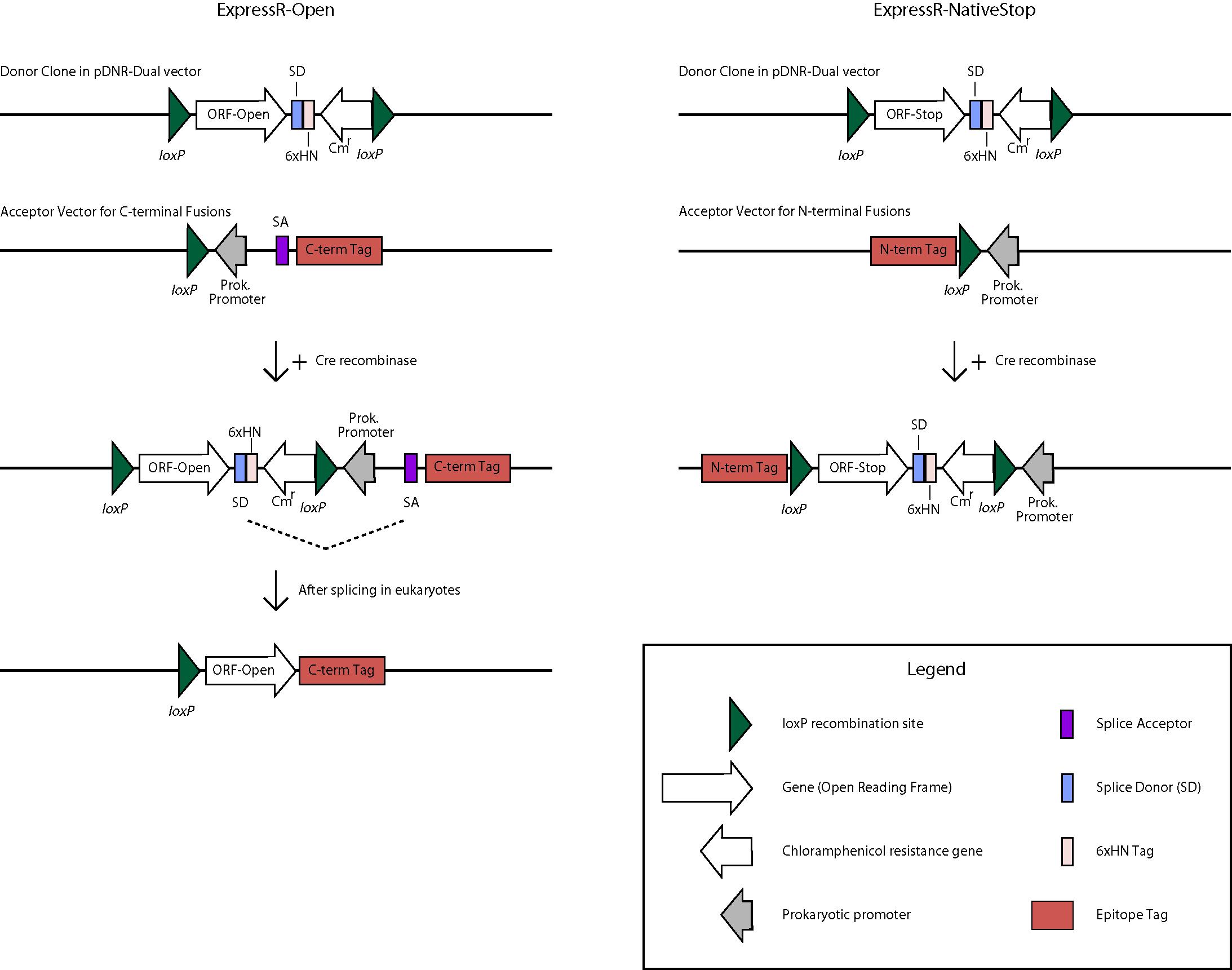 Bdgp Drosophila Proteomics Resource Collections